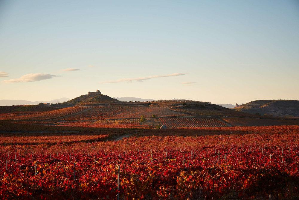 Fotoperiodismo Fotografia Editorial La Rioja País Vasco España - James Sturcke - sturcke.org_044.jpg