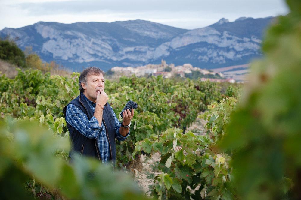 Wine Photography Grape Harvest in Ribera del Duero Toro and Rioja Alavesa Spain - James Sturcke  Photographer | sturcke.org_010.jpg