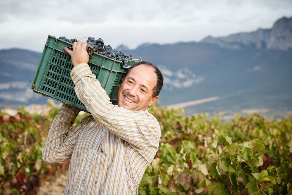 Wine Photography Grape Harvest in Ribera del Duero Toro and Rioja Alavesa Spain - James Sturcke  Photographer | sturcke.org_012.jpg
