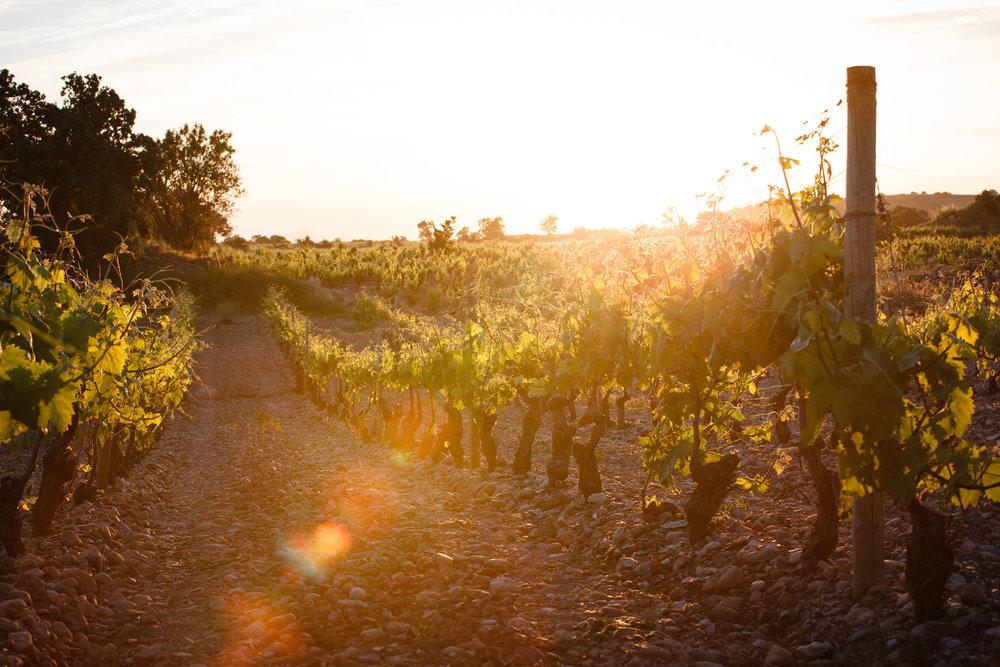 Fotografia Comercial de Vino La Rioja - Bodegas San Pedro Apostol Huercanos - James Sturcke Photographer | sturcke.org_006.jpg