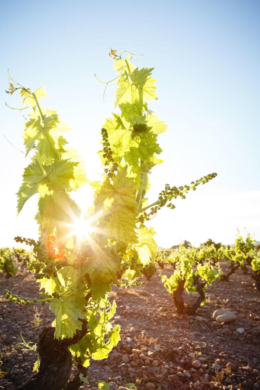 Fotografia Comercial de Vino La Rioja - Bodegas San Pedro Apostol Huercanos - James Sturcke Photographer | sturcke.org_007.jpg