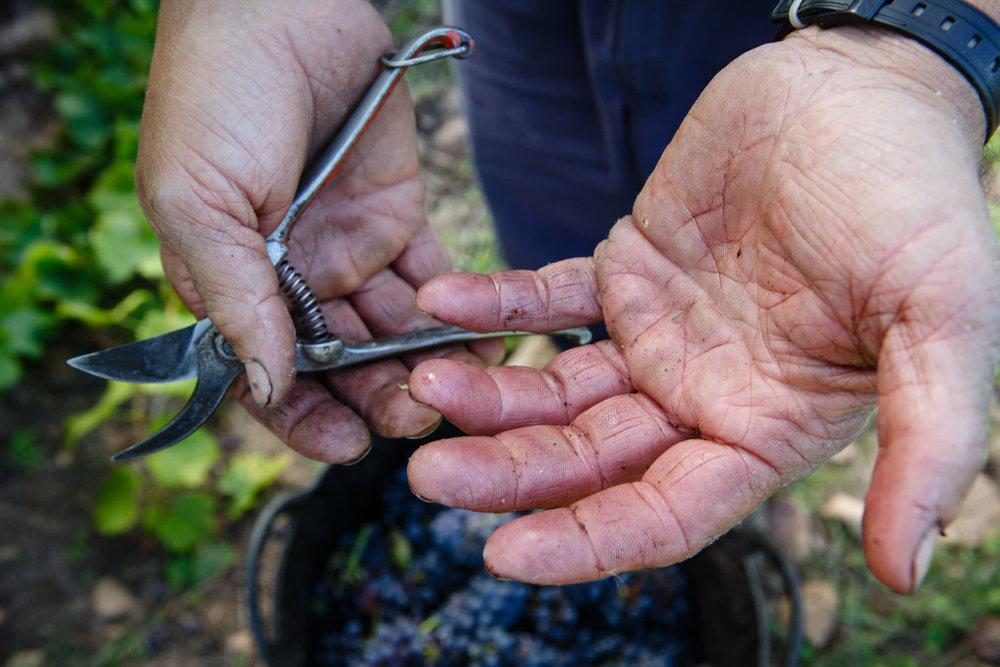 Fotografia Comercial de Vino La Rioja - Bodegas San Pedro Apostol Huercanos - James Sturcke Photographer | sturcke.org_010.jpg