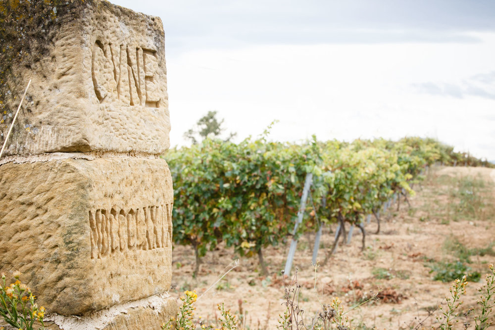 22/10/13 Bodegas CVNE, La Rioja, España. Foto de James Sturcke Fotografía | www.sturcke.org
