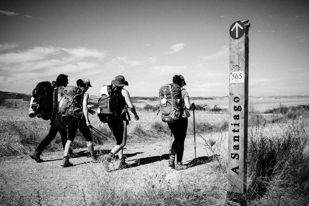 13/09/14 Peregrinos en el Camino de Santiago cerca de Santo Domingo de la Calzada, La Rioja, España. Foto @ James Sturcke | www.sturcke.org