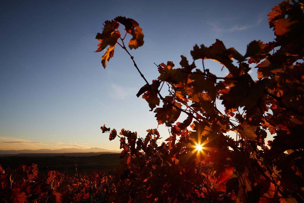15/11/16 Mount San Lorenzo, seen from Rioja vineyards, Spain. Foto de James Sturcke | www.sturcke.org