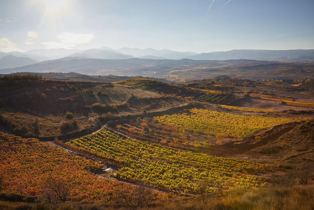 15/11/16 Rioja vineyards near Camprovín, La Rioja, Spain. Foto de James Sturcke | www.sturcke.org