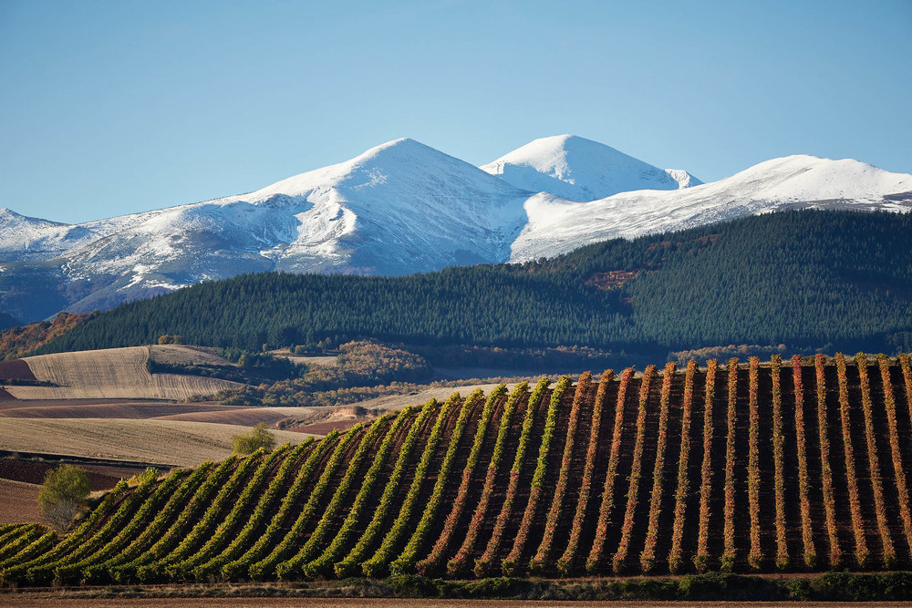 10/11/16  Vineyard near Badarán with Mount San Lorenzo, La Rioja, España. Foto de James Sturcke | www.sturcke.org