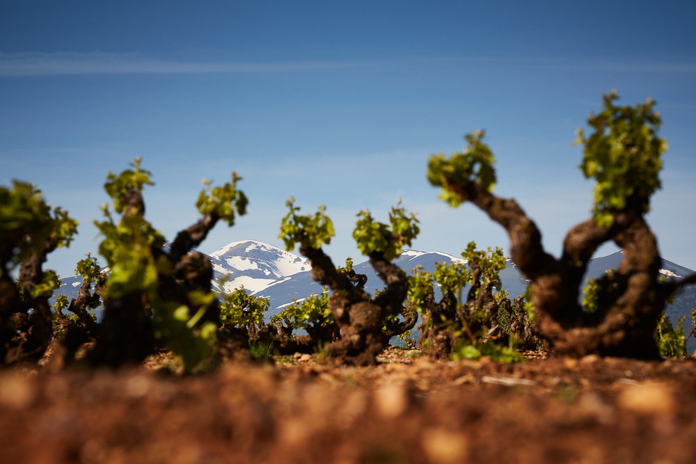 11/5/18 Wine photographer Rioja Spain. Viñedos de Badarán, La Rioja, España. Photo by James Sturcke | sturcke.org
