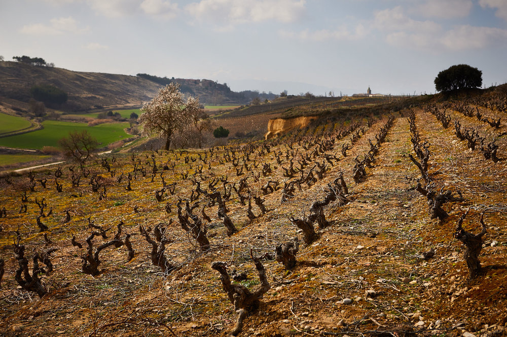 23/2/18 Almendro, Viñedo Ollauri, Gómez Cruzado, Ollauri, La Rioja, Spain. Photo by James Sturcke | sturcke.org