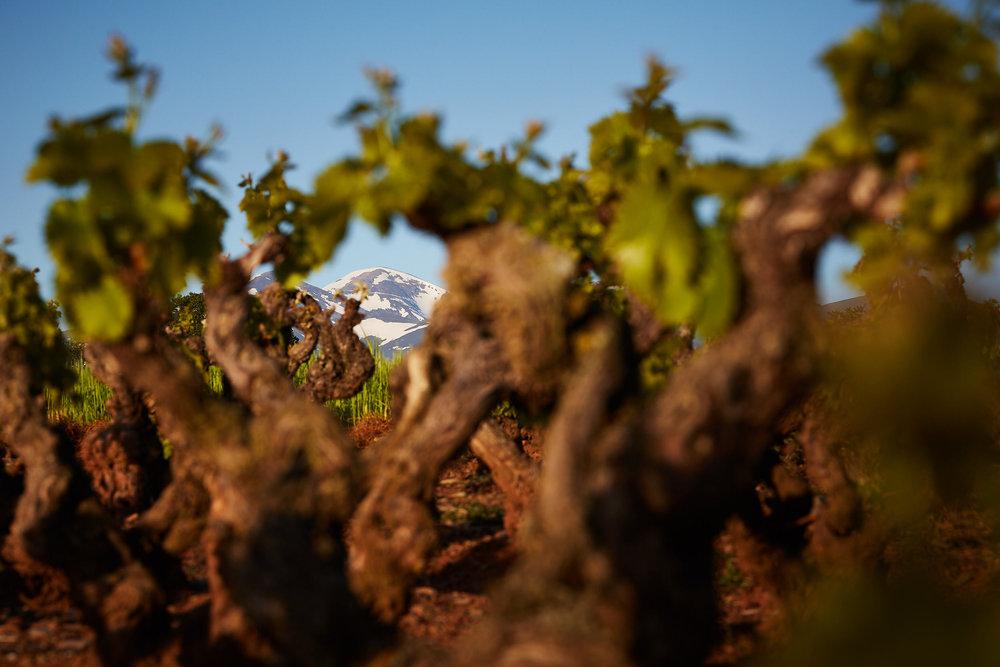 1805Basque_Country_Rioja_Spain_Wine_Photographer_James_Sturcke_0032.jpg