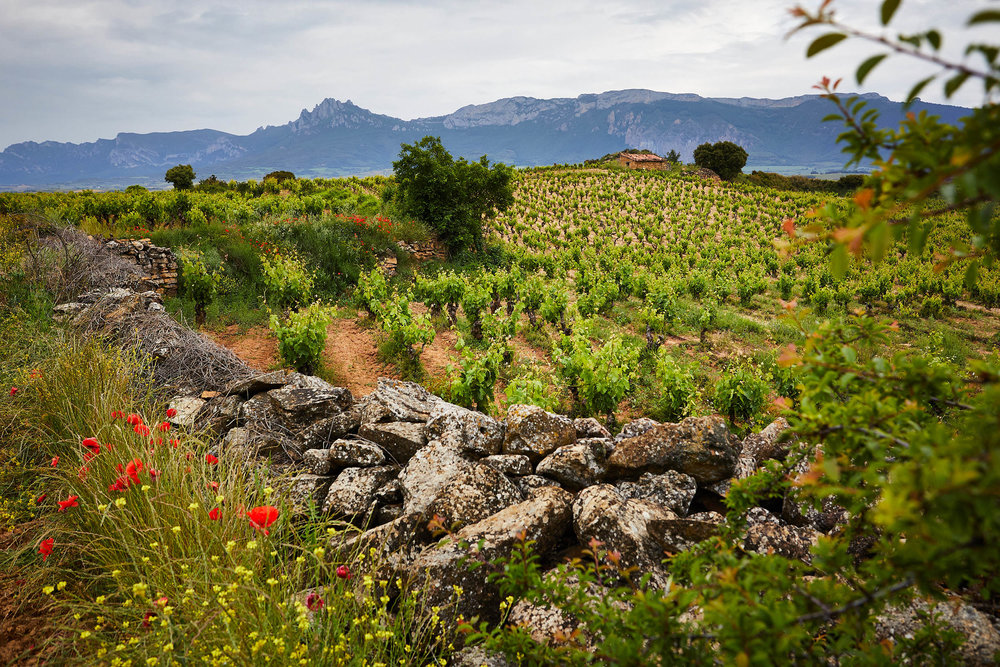1806Basque_Country_Rioja_Spain_Wine_Photographer_James_Sturcke_0037.jpg