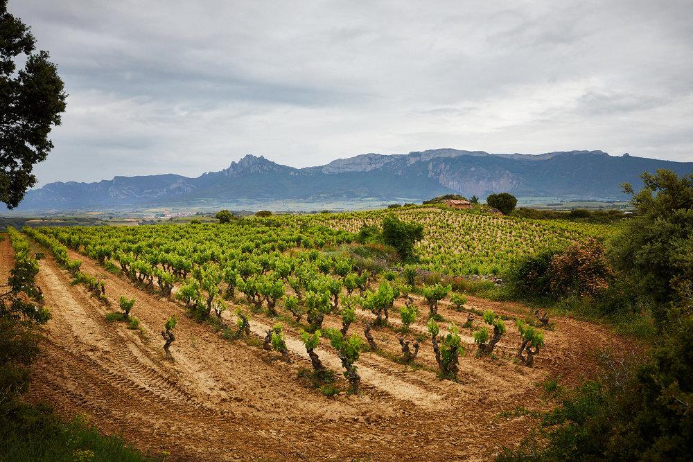 1806fotografia-profesional-corporativa-vino-rioja-espana-James-Sturcke_0026.jpg