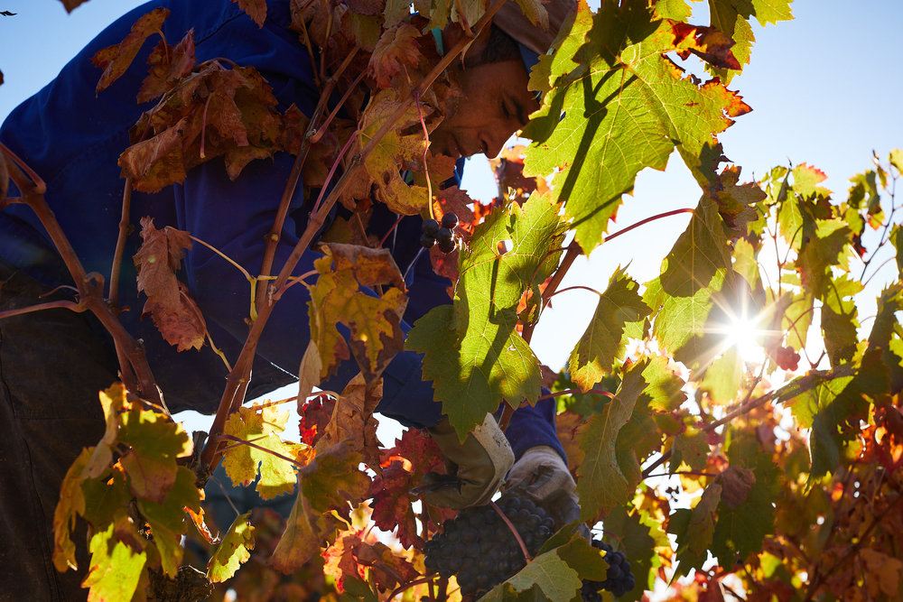 1810Rioja_Wine_Photography_Gomez_Cruzado_0003.jpg