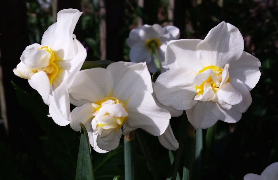 gallery-spring-narcissicream.jpg