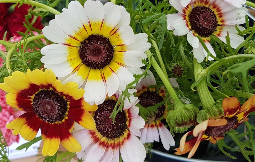 gallery-summer-annchrysanth.jpg