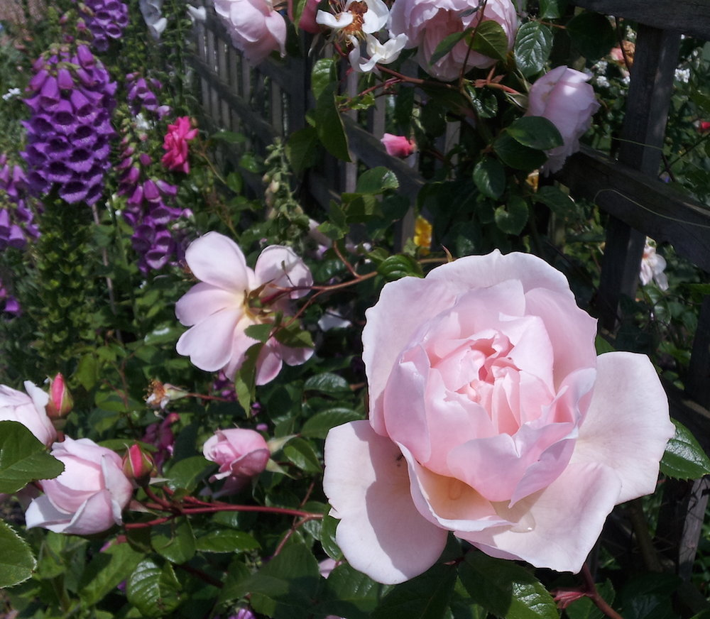 gallery-summer-rosepink2.jpg