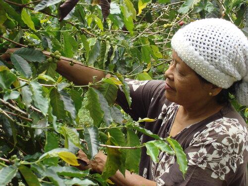 Sumatra 2.JPG