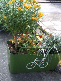 """""""Varied planting"""""""