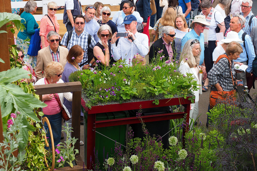 Red Bindock at Chelsea Flower Show 2017