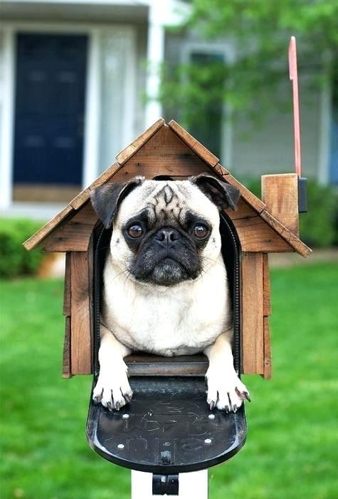 dog-mailbox-mailbox-costume-dog-mailbox-designs.jpg
