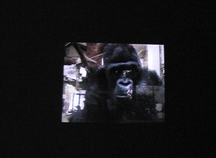 ape house entrance video still jpg 7.jpg