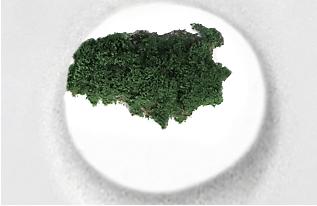 green island website jpg.jpg