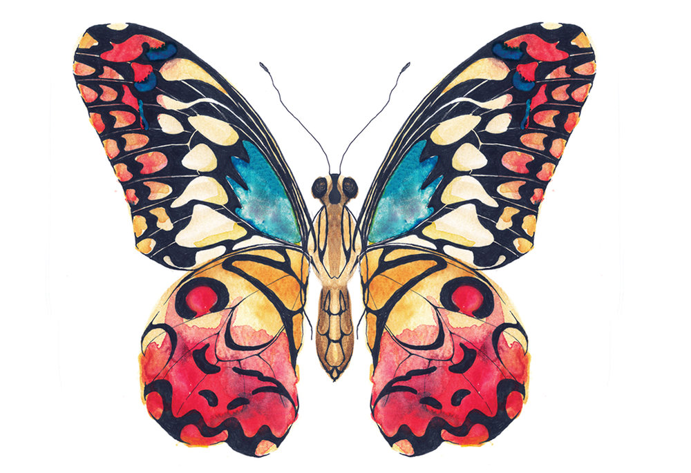 Colourful butterfly art
