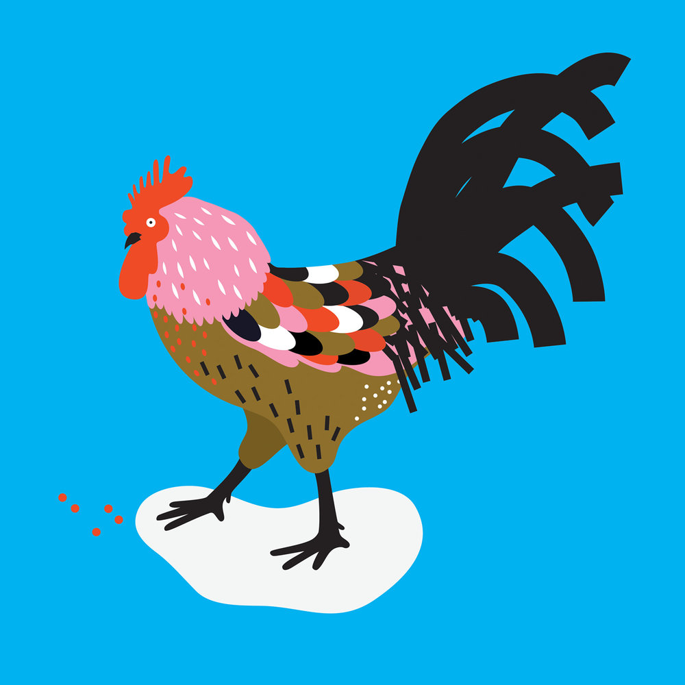 Rooster chicken illustration
