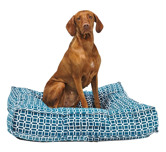 Bowsers Pet Beds - If you're in the market for a new bed for your pup, check out Bowsers Pet Products. I've been a loyal customer of theirs for about 5 years and have never been disappointed!I started using Bowsers Beds when I opened my office in 2012. My patients always loved and continue to love laying on these beds during their appointments and I loved these beds so much that I have used them at home ever since!Chewy loved his Bowsers beds and now Bentley St George loves his as well. In fact, as I write this, Bentley is curled up beside me in his handsome Crescent bed.This is a company that I know and trust and will only use their beds from now on...Bwosers has been incredibly generous and has offered a promo code for BCCB Pet customers when shopping through their site. Use BOWS10 for 10% off your purchase!