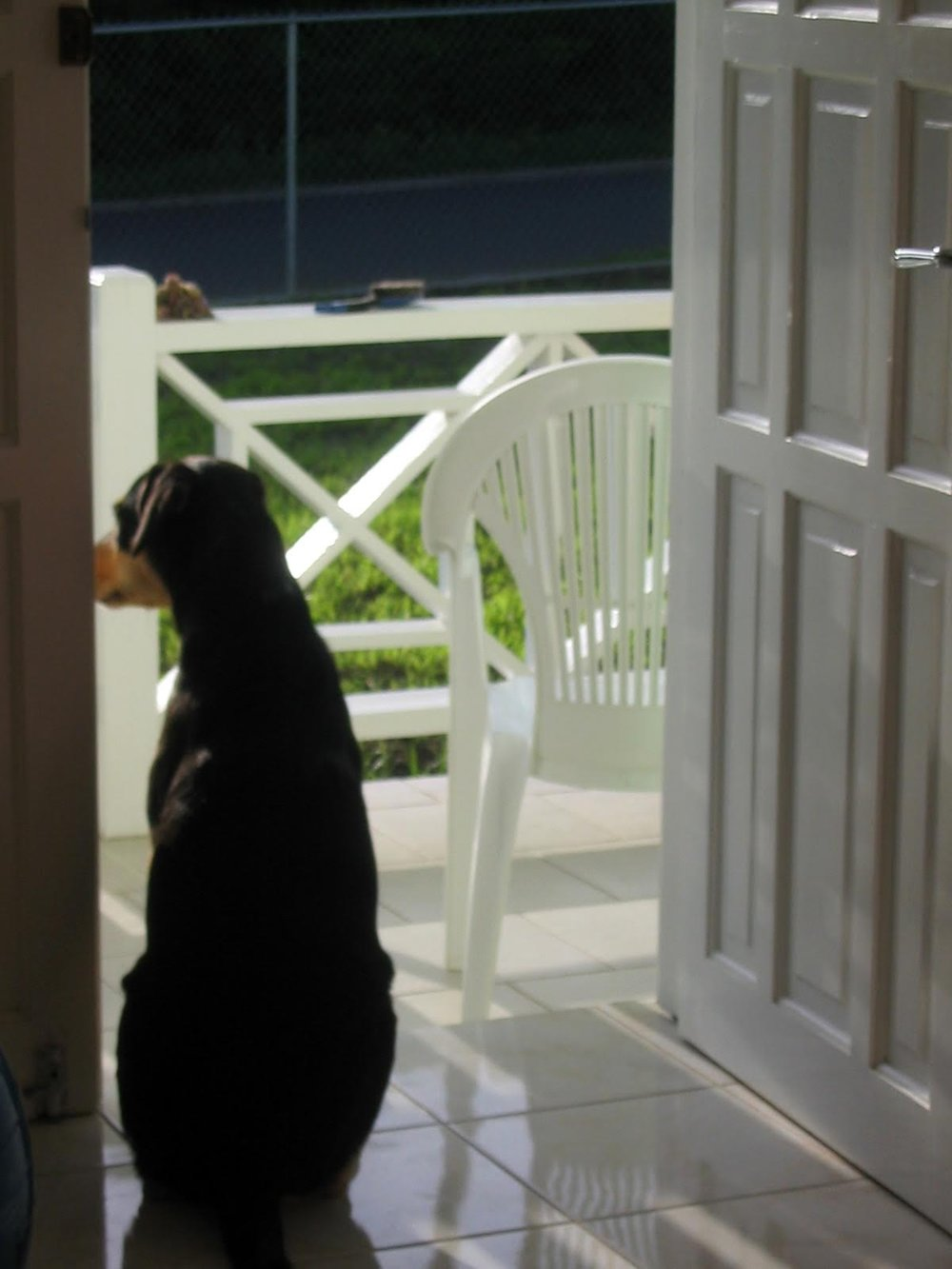 Chewy guarding our apartment in Grenada...