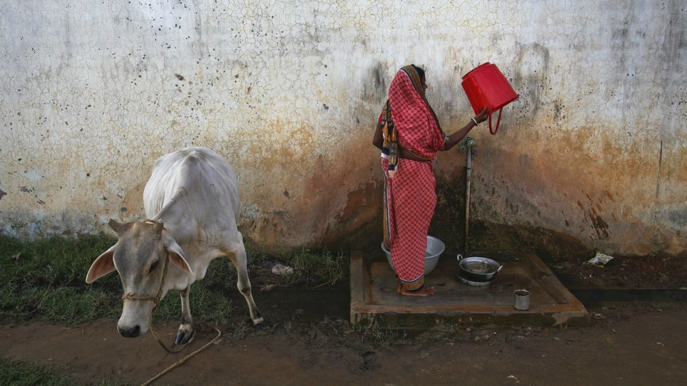 Cow Vigilantism - Development in Reverse