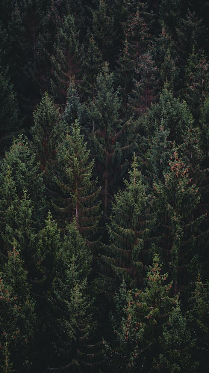 trees-mouldings.png
