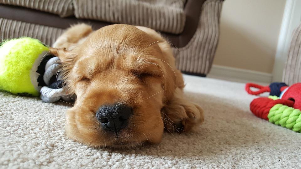 House Sitting  & Overnight Dog Care