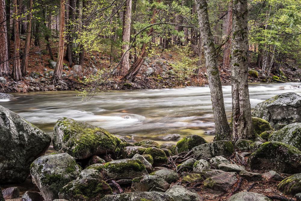 Merced River Spring (0696)