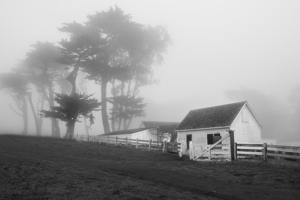 Pierce Ranch in Fog BW - Point Reyes (BW6189)