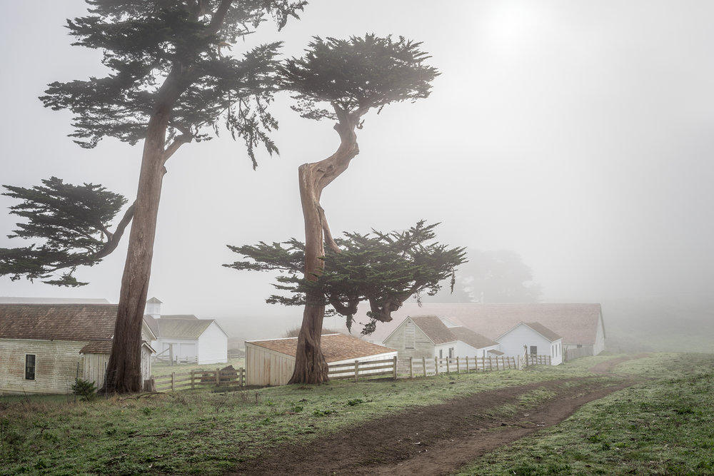 Pierce Ranch Road - Point Reyes (6216)