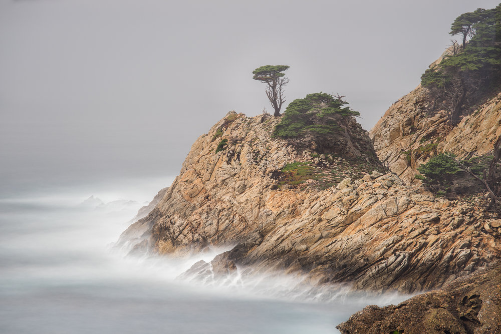 Small Cypress on Point - Point Lobos (6314)