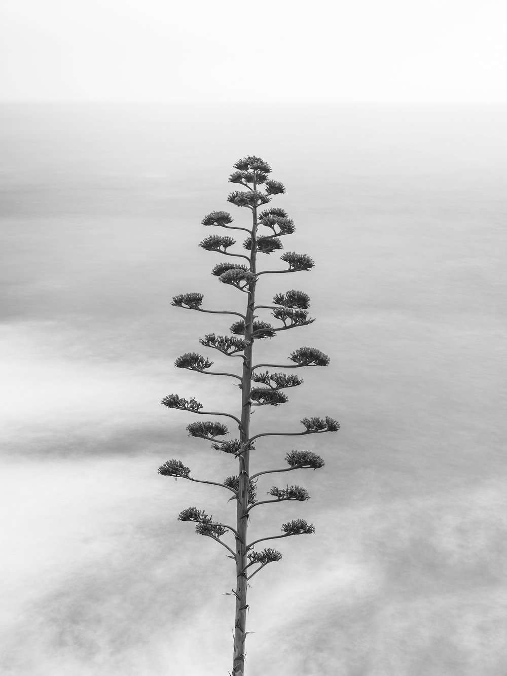Cinque Terre Agave  (2883BW)