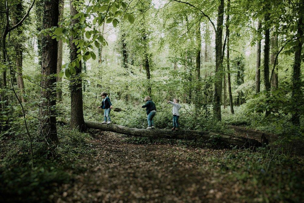 bluebell woods-2.jpg