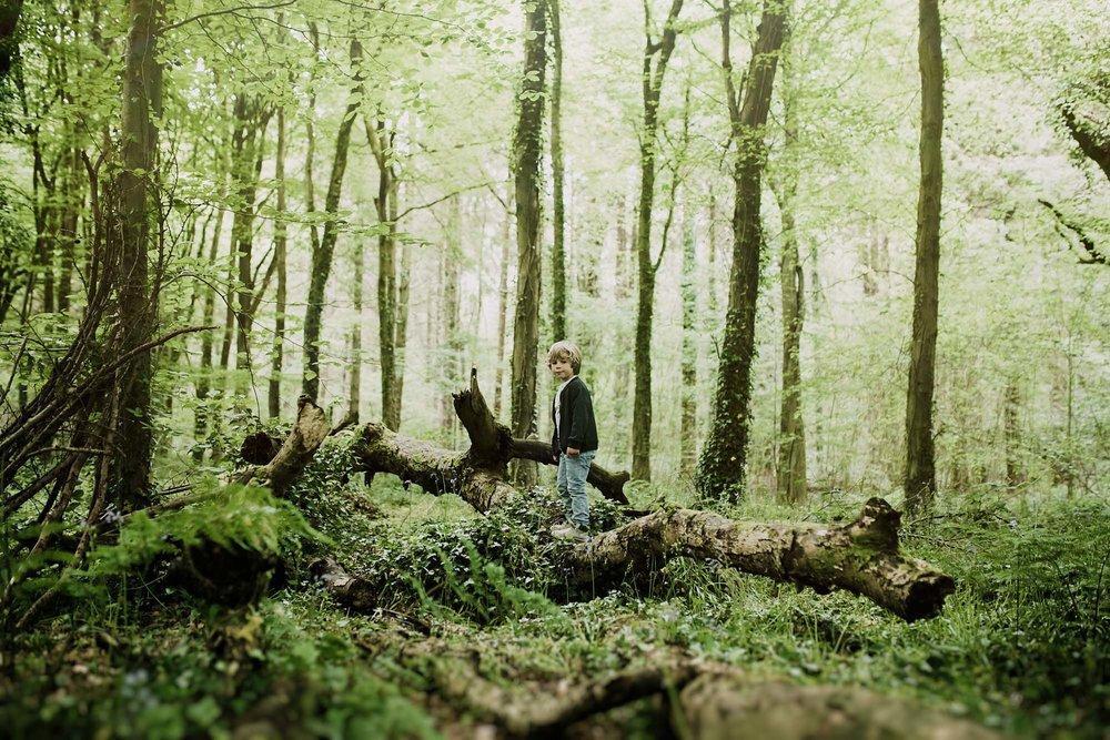 bluebell woods-38.jpg