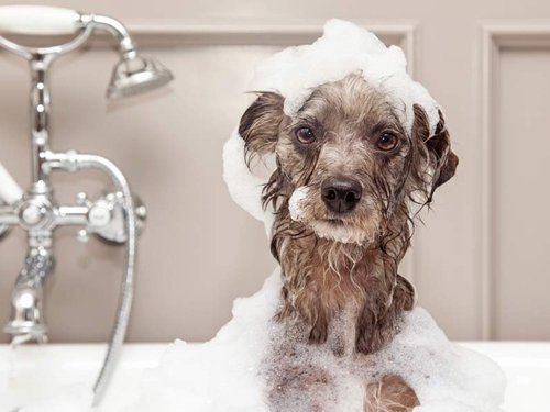 Dog-in-bath.jpg