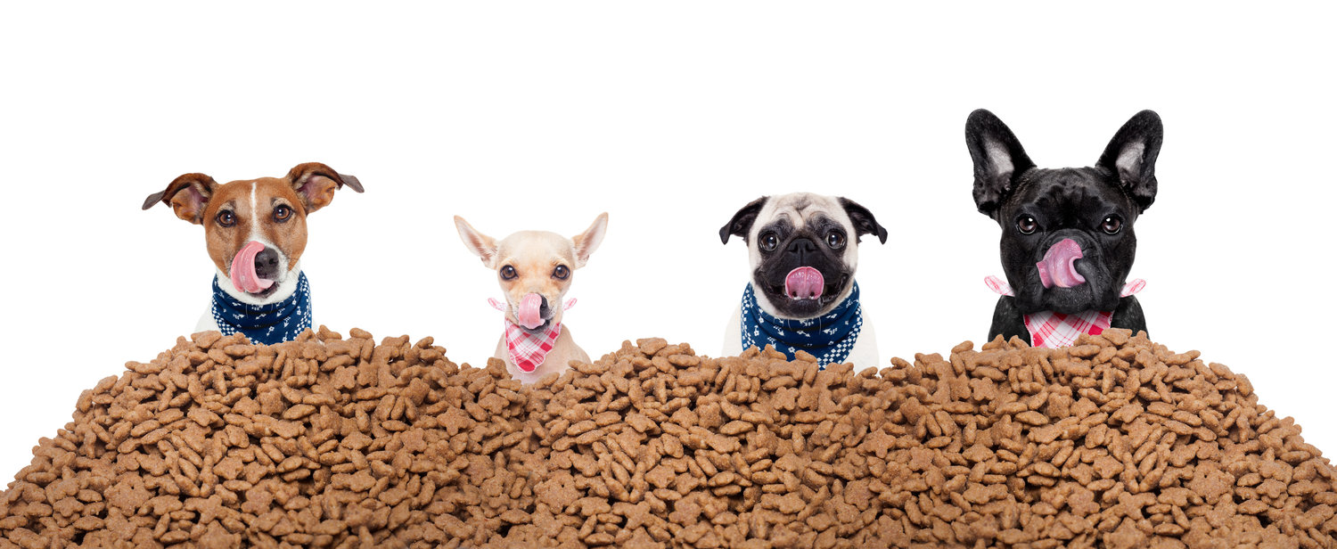 High quality dry food ruff house dog daycare in ottawa pet dog daycare in ottawa dog grooming in ottawa dog care services in ottawa solutioingenieria Images