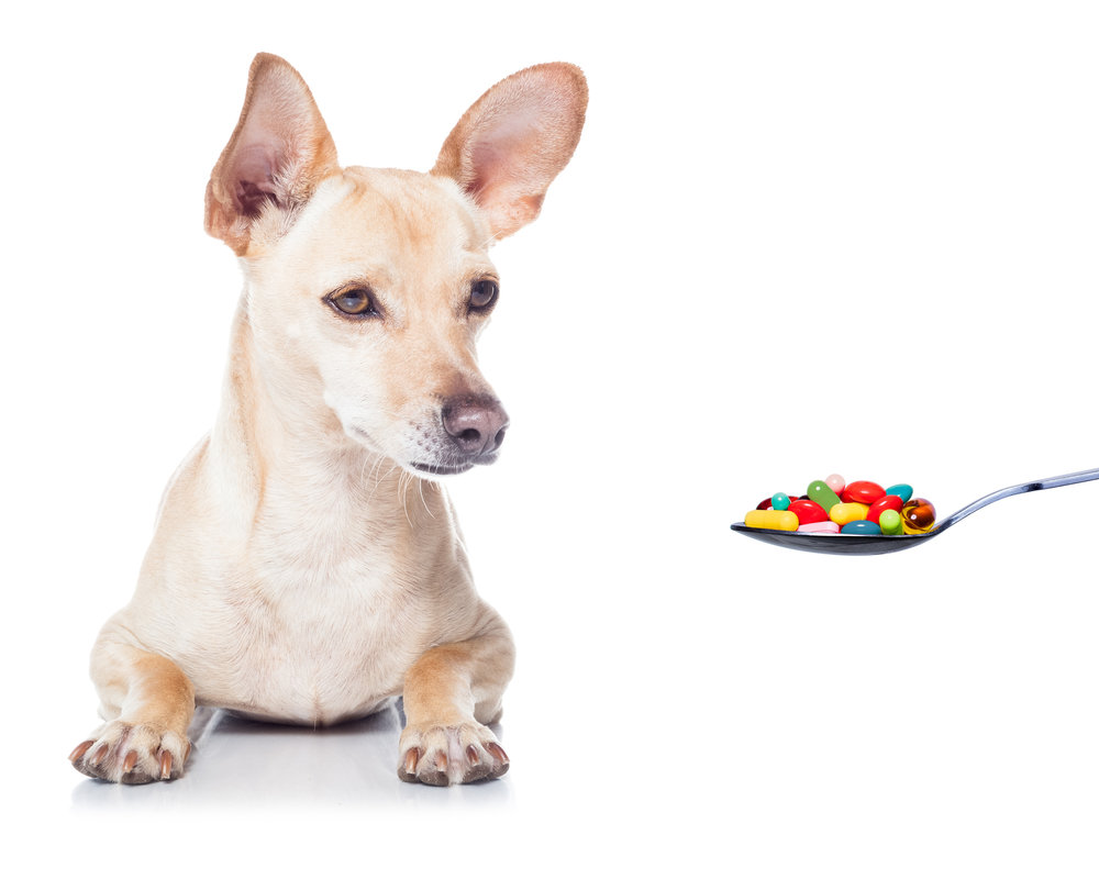 Supplementing your dogs Home cooked Diet is Important