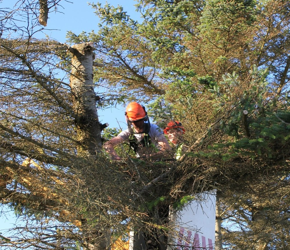 Arboriculture Asset Finance for Arborists and Tree Surgeons