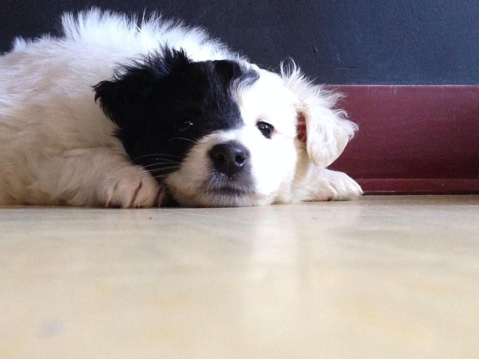 puppy plancher.jpg