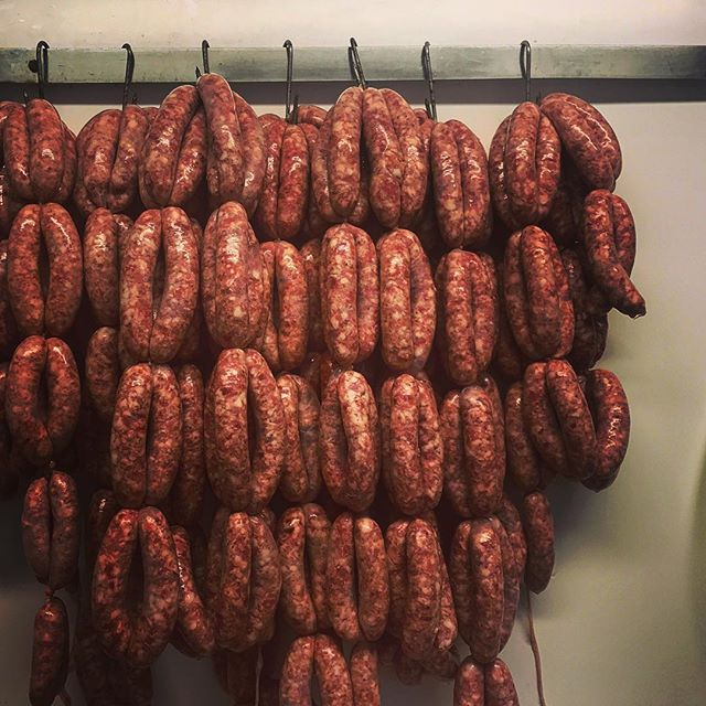 Hello sausage! All made by our fair hands (with a little help from @edgeandson ) We've got over 1000 - and there's still another pig to go. We've done Traditional, Pork & Apple, Toulouse, Chorizo and there might be some others on the way. This morning was sausage sandwiches all round, and as I sat at the kitchen table with my family and a few friends I realised this was a very special moment for me. Eating the first pork chop was such an experience last week, after a year in the making since we decided to get some pigs. But sharing this food with other people is magical for me. By nourishing and nurturing my pigs I am now able to do the same for the people I care about, knowing EXACTLY what I am feeding them and feeling proud of the food I am serving. It's a very special feeling to sit down and share food that you've worked for a year to produce. Loving, caring and providing for these pigs is now allowing me to love, care and provide for the people around me, and that's a very special feeling.