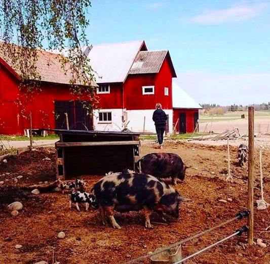On Kristofer's farm in Sweden