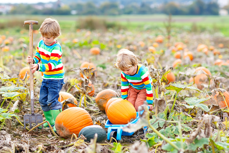 Families living in Houston go to the pumpkin patch.jpg