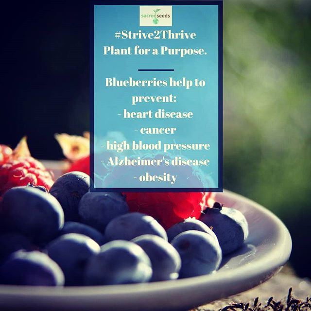 Blueberries are often referred to as a superfood and for good reason! Full of antioxidants, flavanoids, polyphenolic compounds, and soluble and insoluble fiber, they reduce inflammation, protect our cells, reduce the risk of cognitive decline, lower blood pressure, keep our blood vessels healthy and slow digestion for a stable release of natural sugar and long-lasting energy. And, they do all this with only 80 calories per cup. So, plant and enjoy for a health boost. #Strive2Thrive #healthyliving #gardening #food #health #lifestyle