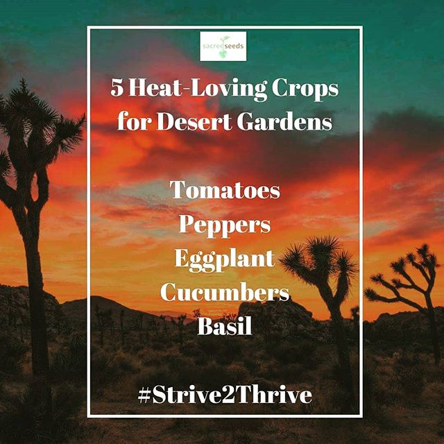 Just because you live in a harsh environment, doesn't mean you can't enjoy the health benefits of an abundant garden harvest. The trick is to practice desert-specific gardening techniques. Begin by choosing crops that thrive in heat. #desertgardening #Strive2Thrive #health #gardeningtips #educate #gardening